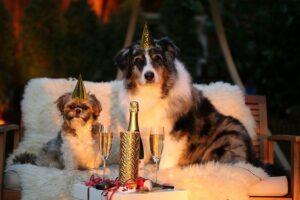 Hunde auf Sofa an Sylvester
